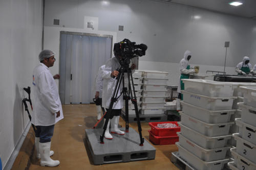 Shooting in the fish factory